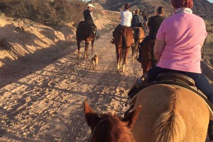 Picture of Wild West Horseback Dinner Ride