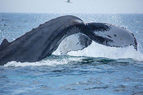 New England Aquarium Whale Watch