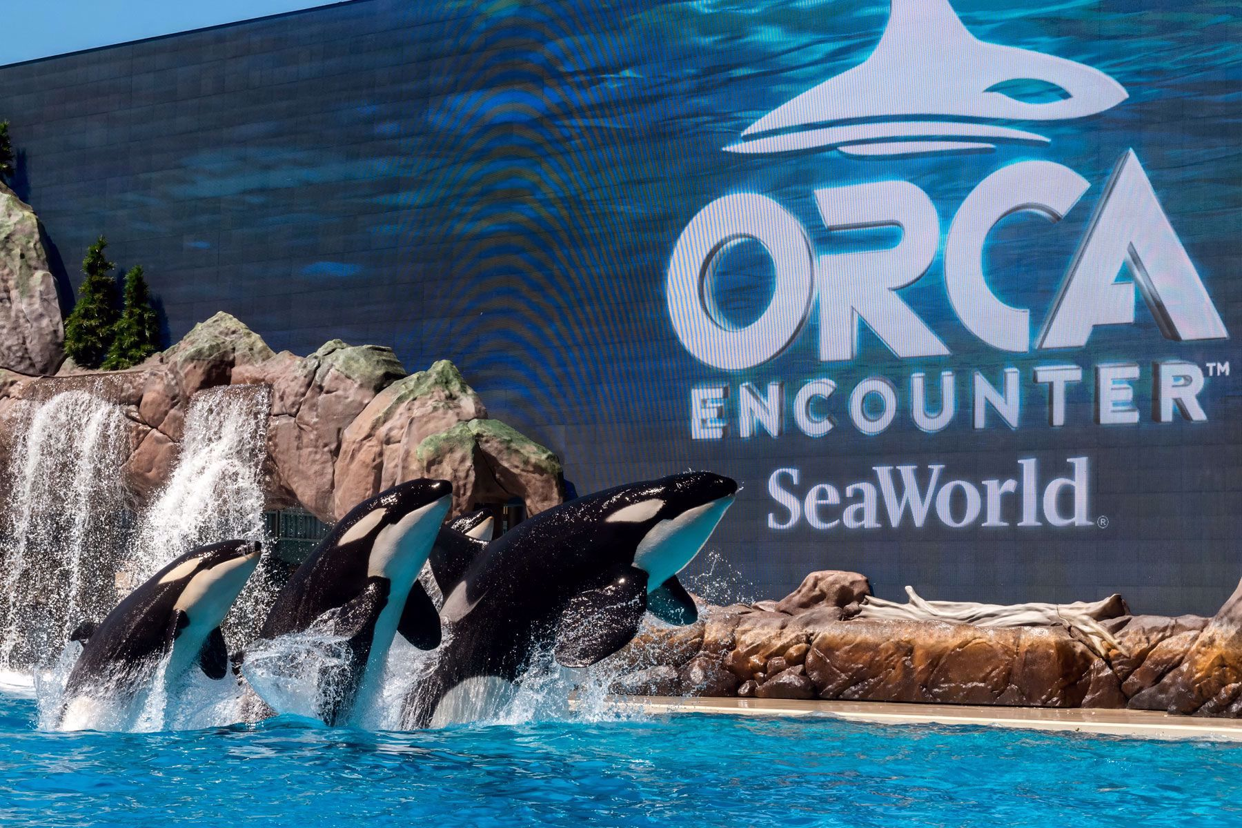 Orca Encounter